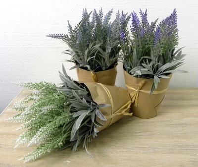 29419-Lavendel--Topf--3--verschiedene--Farben--8x22
